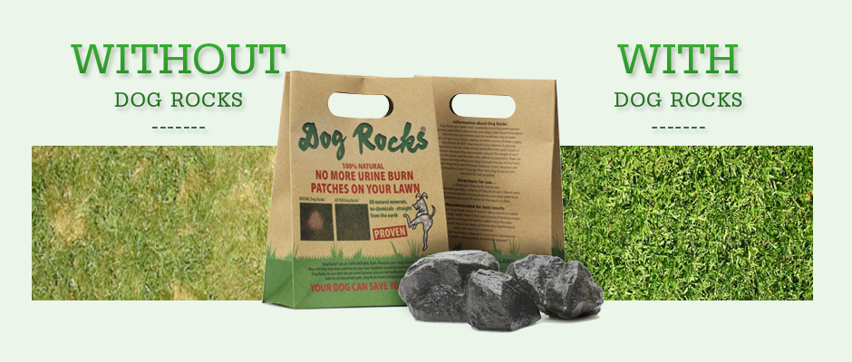 Dog Rocks Let Your Dog Save Your Lawn